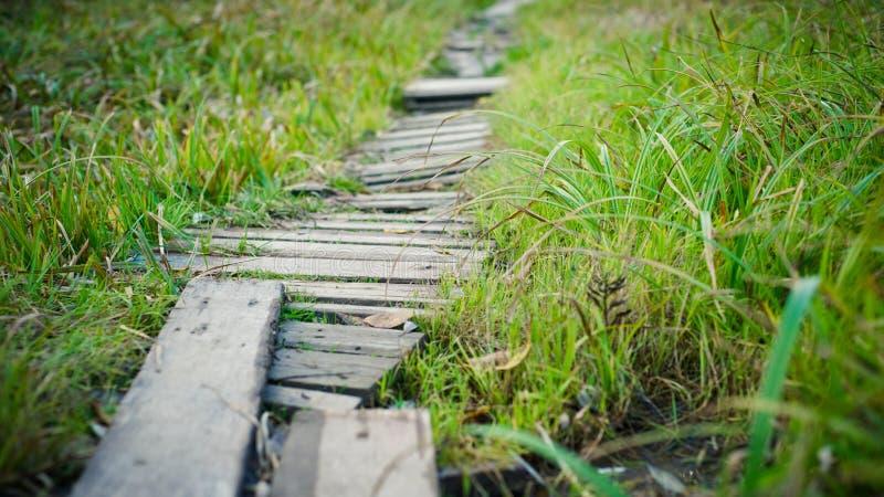 Alter hölzerner Fußweg durch Gras stockfoto