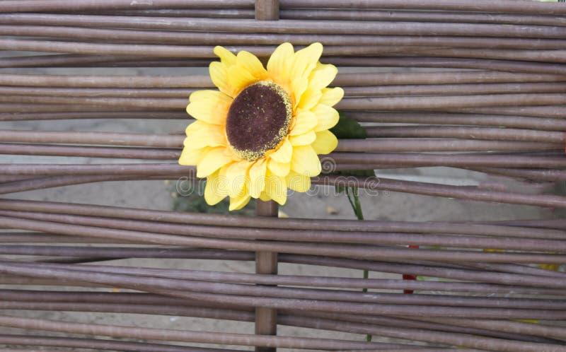 Alter hölzerner Hintergrund, grüner Hintergrund mit Sonnenblume und Mohnblume lizenzfreie stockfotos