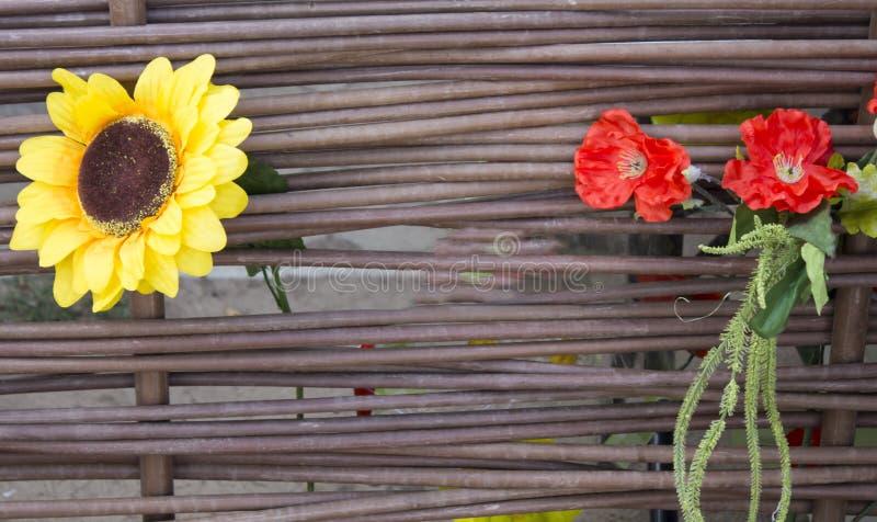 Alter hölzerner Hintergrund, grüner Hintergrund mit Sonnenblume und Mohnblume stockbild