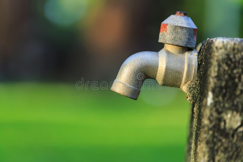 Alter Hahn im Freien ohne Wasser im Garten auf grünem Unschärfe backgro stockbilder