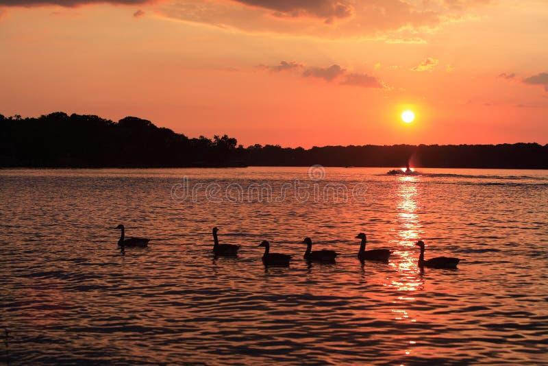 Alter Hickory-Sonnenuntergang stockfoto