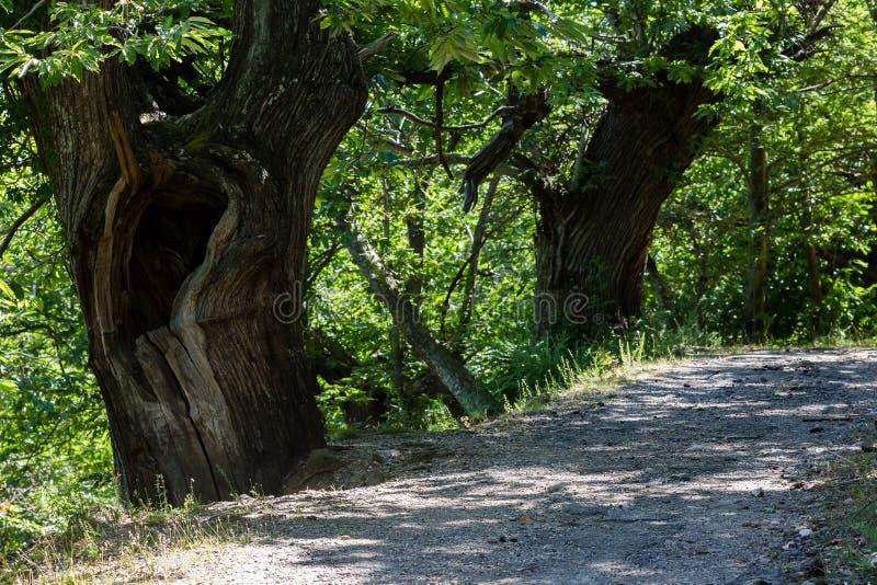 Alter hohler Baum stockfoto