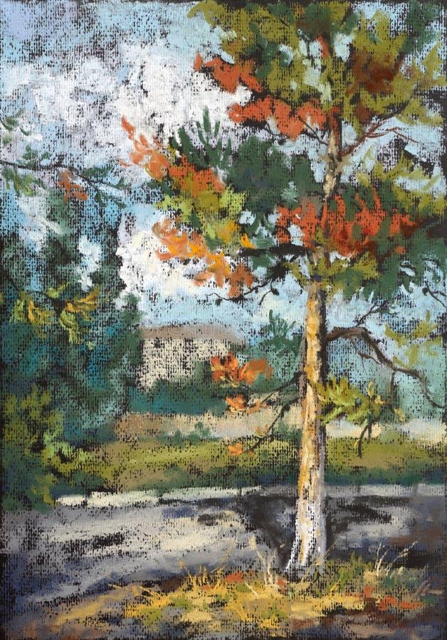 Alter Kieferbaum In Der Sonnenuntergangleuchte Stockfoto