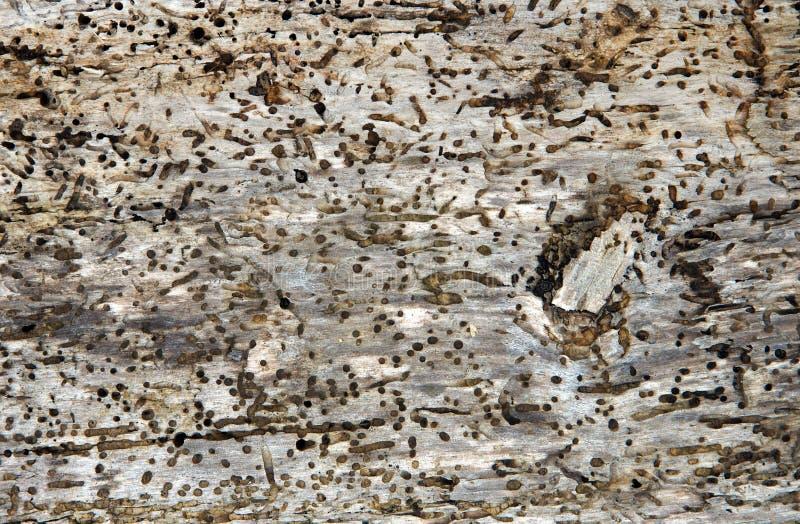 Alter Klotz mit Holzwurmlöchern lizenzfreie stockfotos