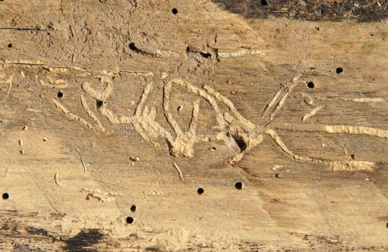 Alter Klotz mit Holzwurmlöchern stockbild