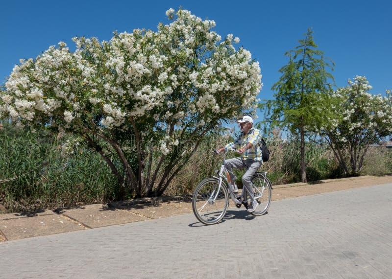 Alter Mann auf dem Fahrrad, das entlang den Fluss Guadalquivir in Sevilla, Andalusien, Spanien radfährt stockfotos