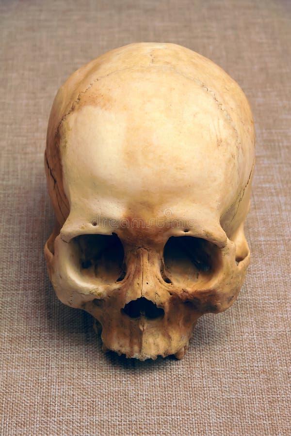 Alter menschlicher Schädel stockfotos
