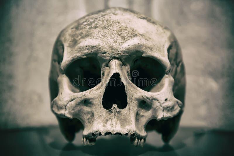 Alter menschlicher Schädelabschluß oben Getontes Bild stockbild