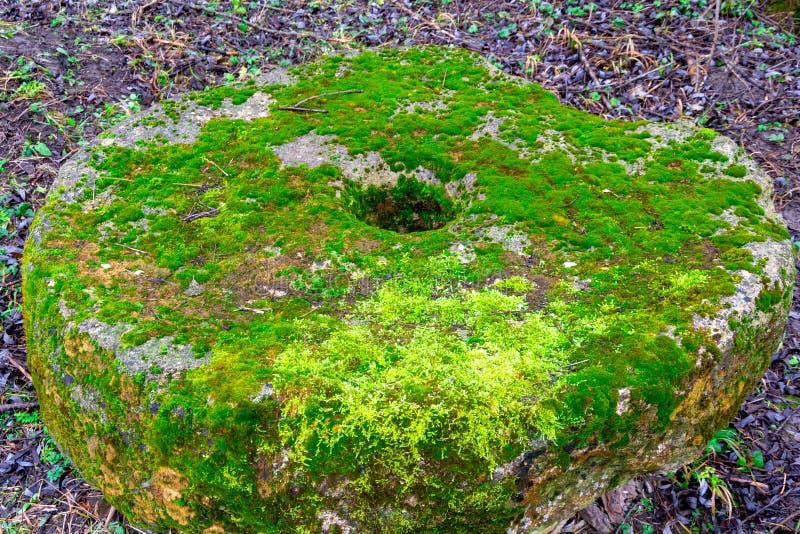 Alter moosbedeckter Steinmühlstein aus den Grund in einem Hintergrund des grünen Grases Blaue wilde Blumen des Kriechengamander-e stockbild