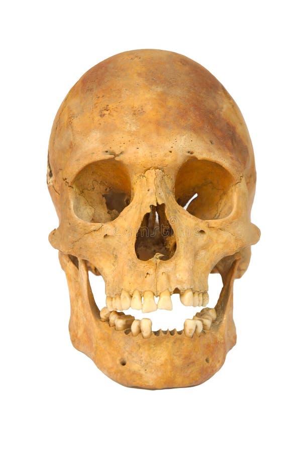 Alter prähistorischer menschlicher Schädel getrennt lizenzfreies stockbild