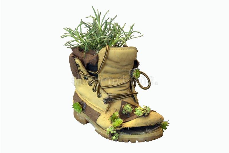 Alter Stiefel mit Anlagen lizenzfreies stockbild