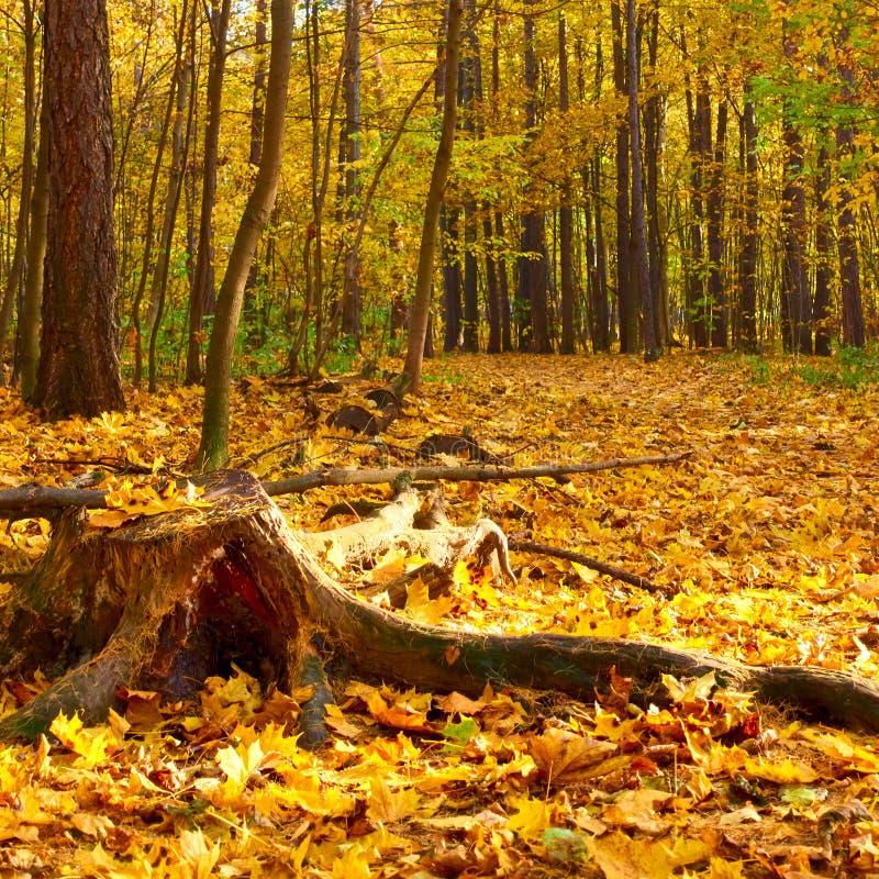 Alter Stummel im Herbstpark lizenzfreie stockfotos