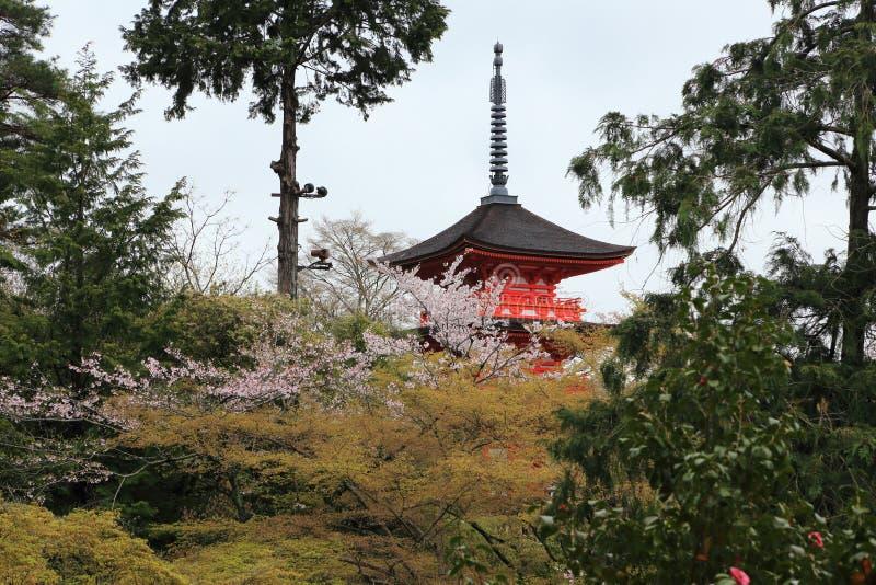 Alter Tempel Janpan hinter Kirschblüte-Bäumen stockbilder