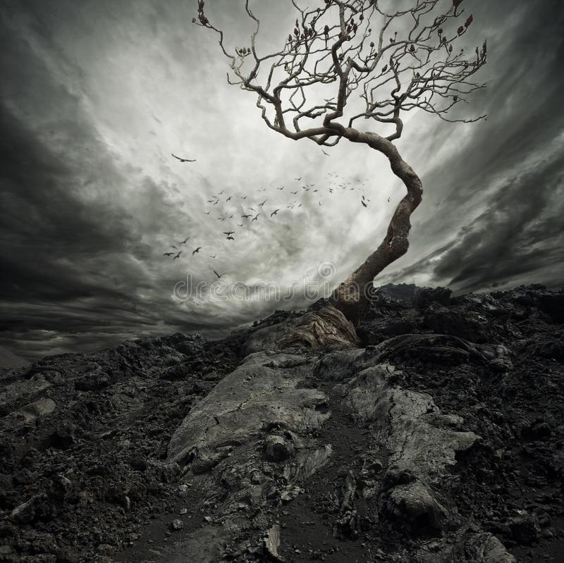 Alter trockener Baum lizenzfreies stockfoto