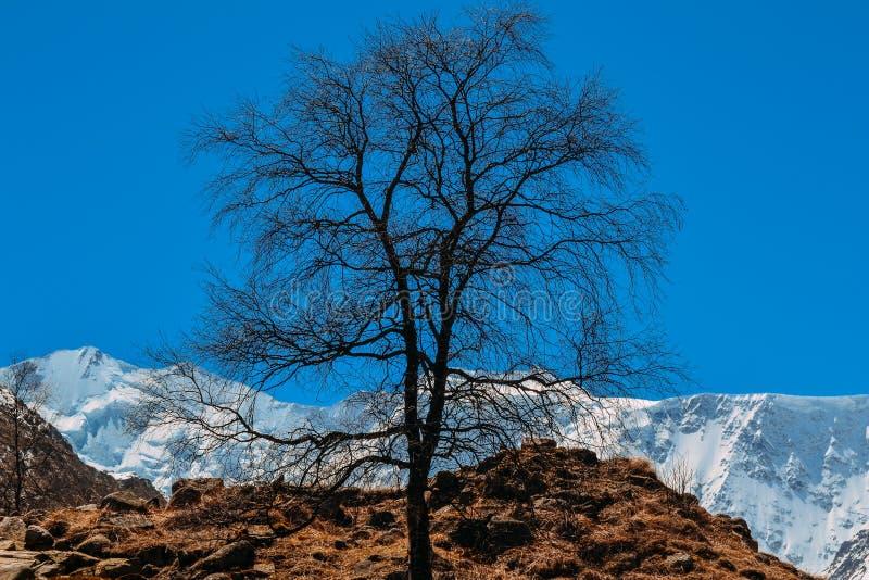 Alter trockener Baum auf dem Berg gegen den blauen Himmel lizenzfreie stockfotos