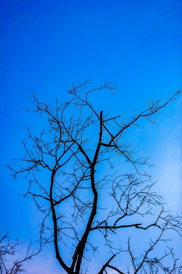 Alter trockener Baum mit Niederlassungen und keinen Blättern gegen einen blauen Himmel der stockbild