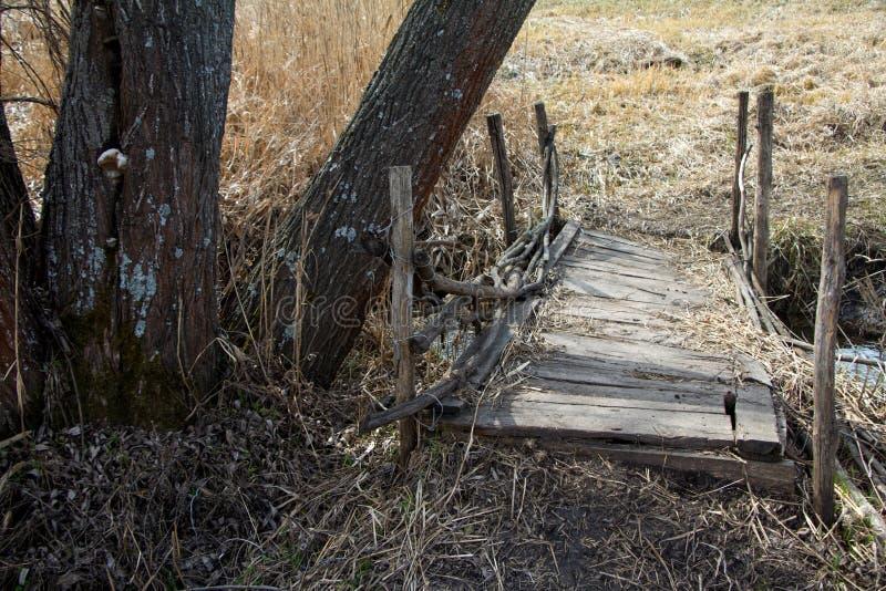 Alter verlassener Gehweg über The Creek auf dem Hintergrund von überwucherten Sträuchen und von Bäumen stockbild