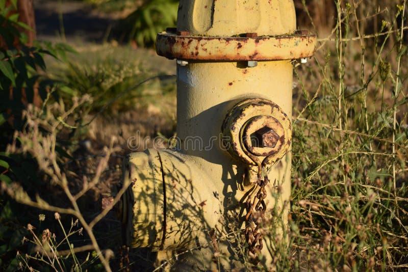 Alter verrosteter Hydrant unter Unkräutern lizenzfreie stockbilder