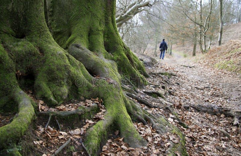 Alter Wald stockfotos