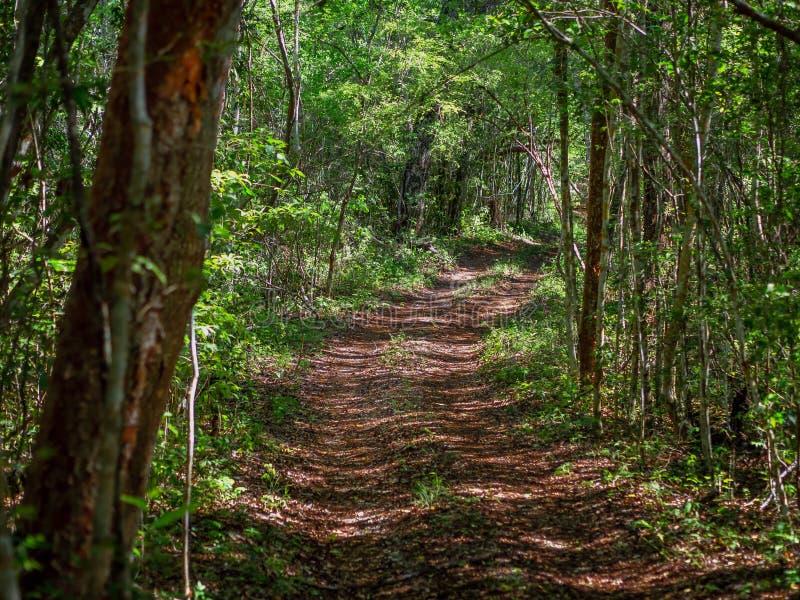 Alter Weg durch den mexikanischen Dschungel in Calakmul stockfoto