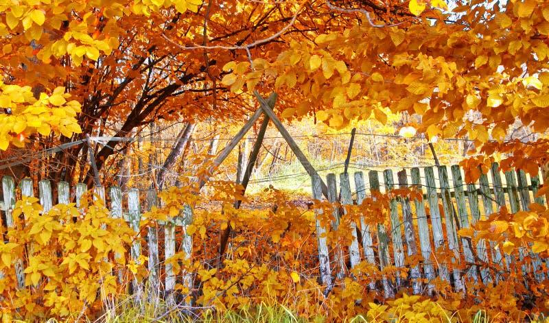 Alter Zaun im Herbst lizenzfreie stockfotos