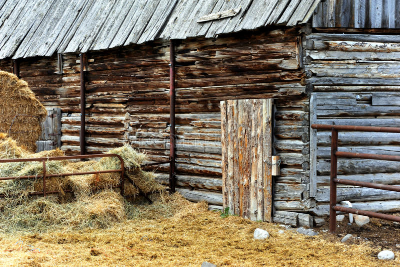 Altern-Scheune in Montana lizenzfreies stockbild