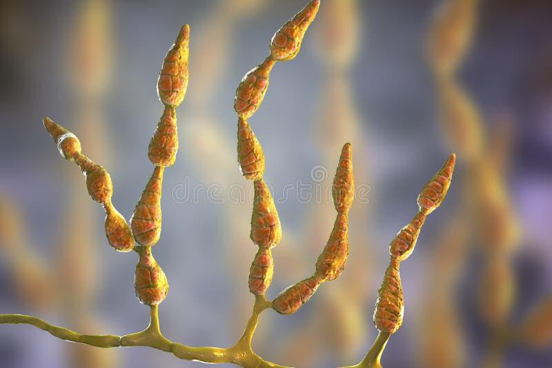 Alternata d'alternaria de moule, champignon allergique illustration de vecteur