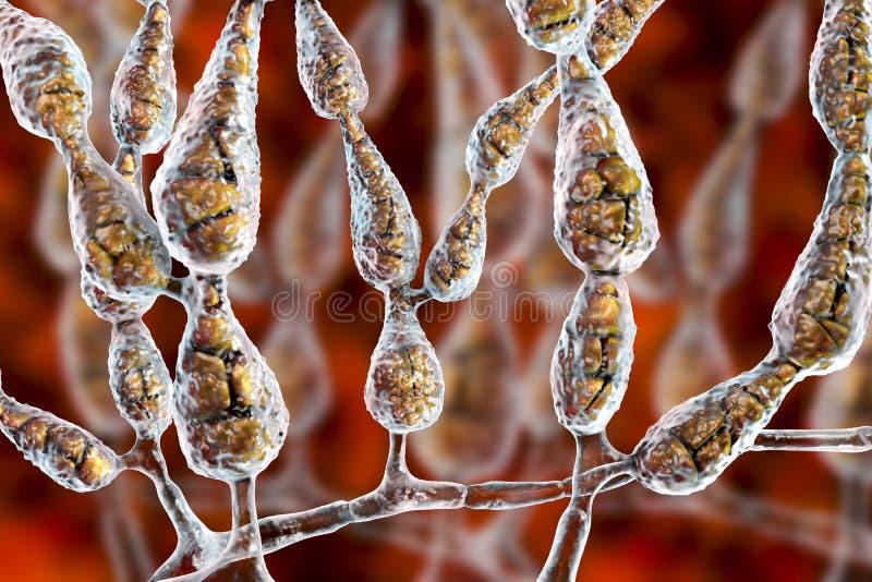 Alternata d'alternaria de moule, champignon allergique illustration libre de droits