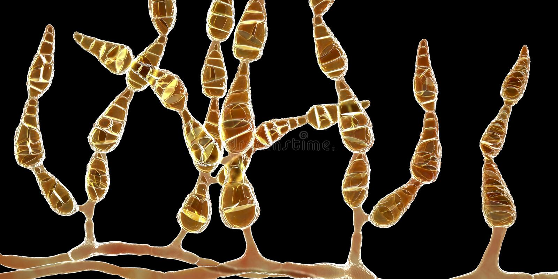 Alternata d'alternaria de moule, champignon allergique illustration stock