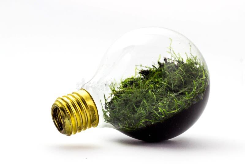 Alternatieve manier om gloeilampen te recycleren door installaties binnen te planten Lamp gloeiend met mos binnen op een witte ba royalty-vrije stock foto's