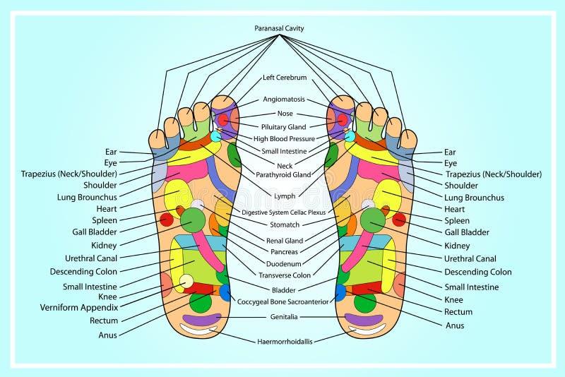 A alternativa tradicional cura, acupuntura - esquema do pé ilustração royalty free