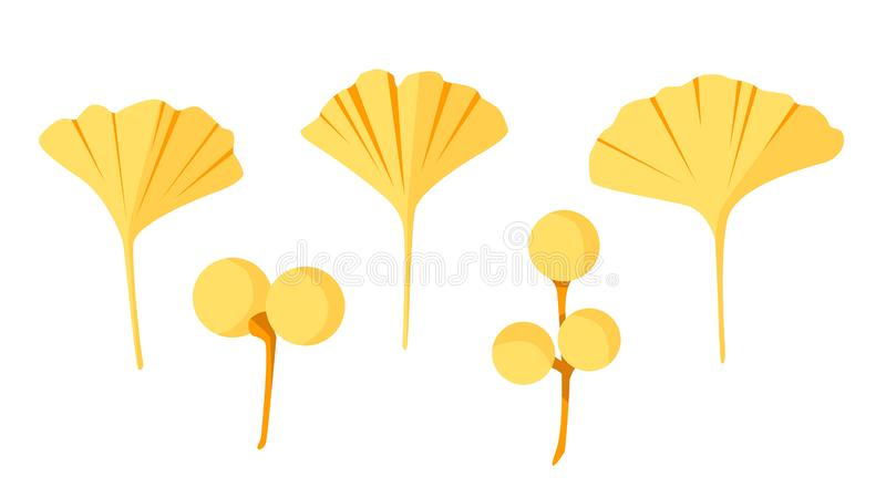 Alternative Anlage - Ginkgo biloba Blätter und Beeren Vektor eingestellt in flache Art vektor abbildung