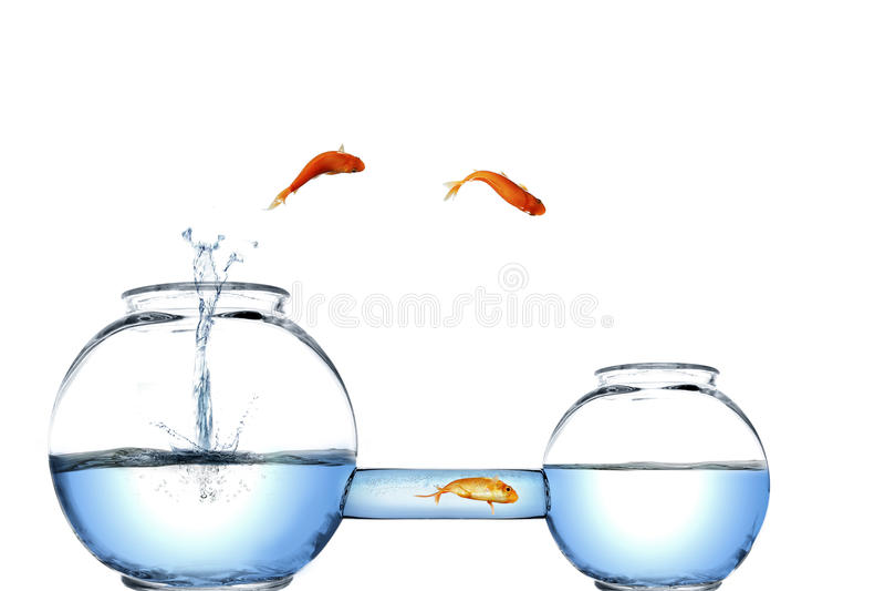 Alternative easy way stock illustration illustration of for Golden fish pipe