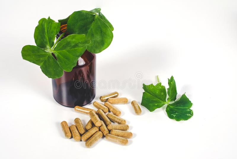 Alternative herb capsule spill out of bottle ,health. Concept stock photos