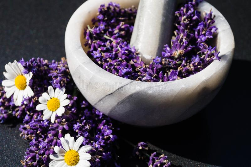Alternative medicine with lavender. Homeopathy, the alternative medicine healing with natural medicinal herbs and flowers of the nature royalty free stock photos