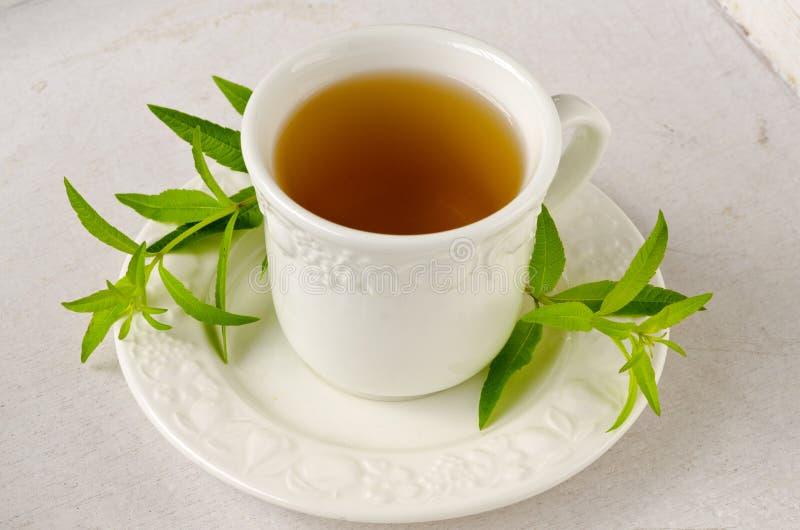 Alternative Medicine. Lemon verbena herbal tea. stock photos
