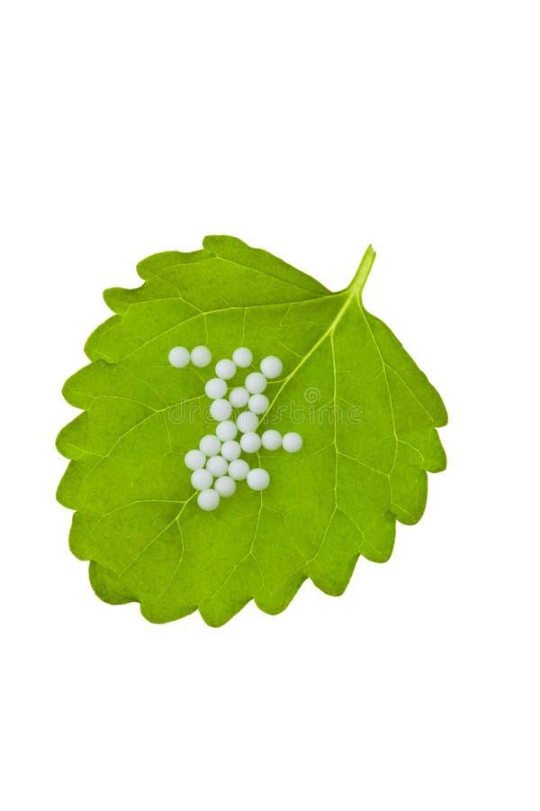 alternatywa jako globula homeopatii medycyna zdjęcie royalty free
