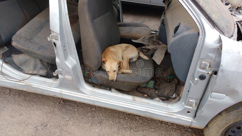 Altes Auto und Hund lizenzfreie stockfotografie