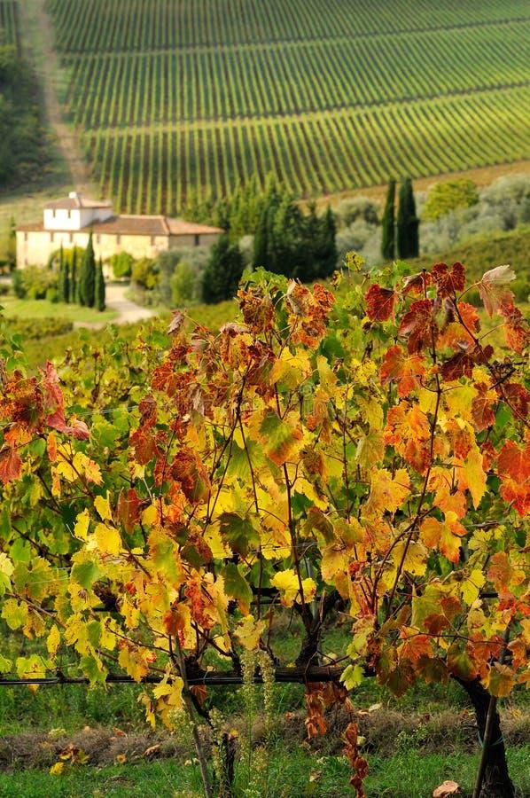 Altes Bauernhaus in einem colorfull wineyard im Herbst in Toskana lizenzfreie stockbilder