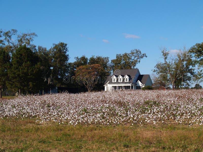 Altes Bauernhof-Haus hinter Baumwollfeld in S. Georgia lizenzfreie stockbilder