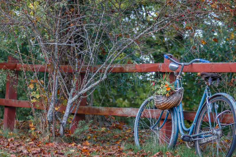 Altes blaues Fahrrad lizenzfreies stockfoto