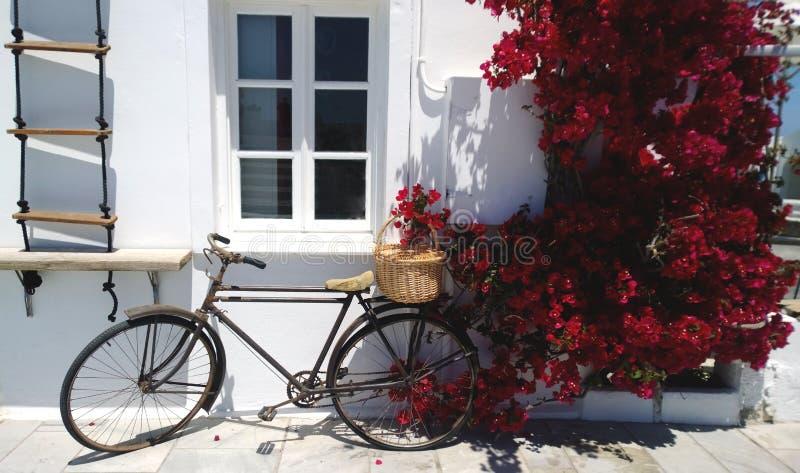 Altes Fahrrad, das an eine weiße Wand und Burgunders blühenden Bouganvillabüschen sich lehnt stockbilder