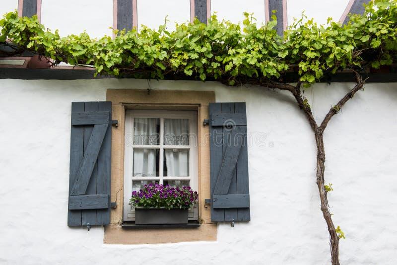 Altes Fenster mit Fensterläden, Blumenkorb und Weinstock, Deutschland stockfoto