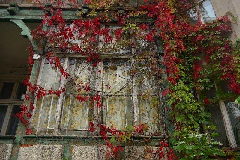Altes Fenster mit Herbstblättern lizenzfreie stockbilder