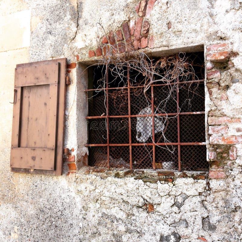 Altes Fenster mit Stangen und Reben stockfotografie