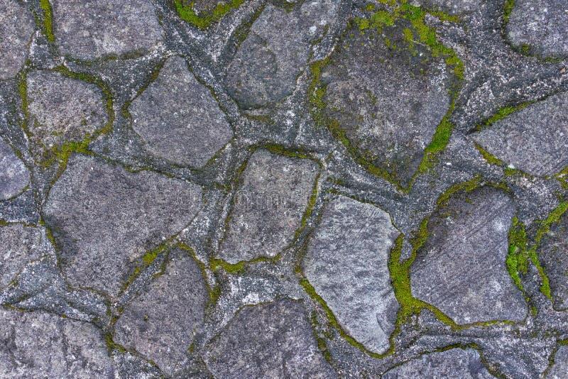 Altes gealtertes Felsenstein-Bodenmuster mit grünem MOS unter Verwendung als textur stockbild