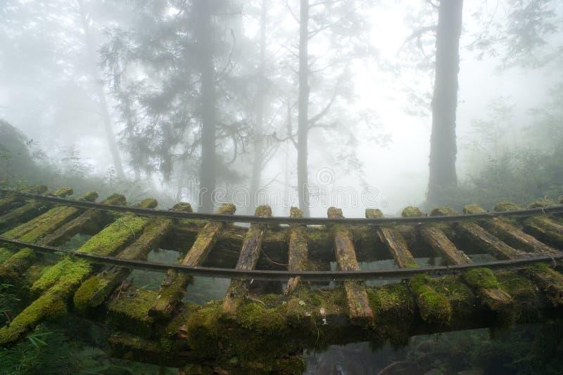 Altes Gleis im Wald stockfotos