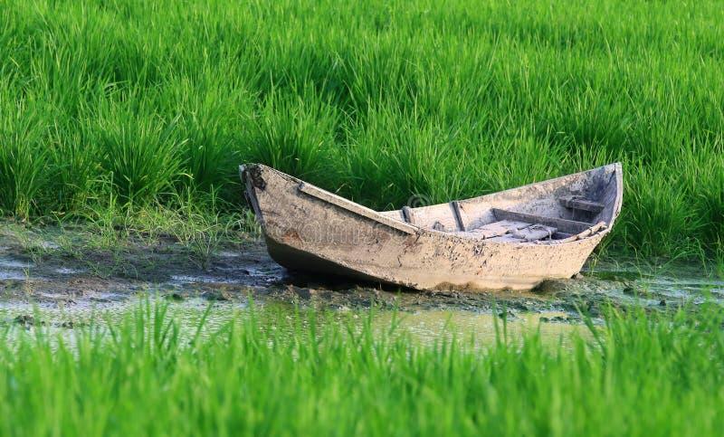 Altes hölzernes Boot in einem Reisfeld lizenzfreies stockfoto