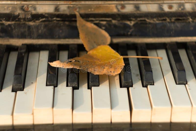 Altes Klavier, Herbstlaub auf den Schlüsseln, stockbild