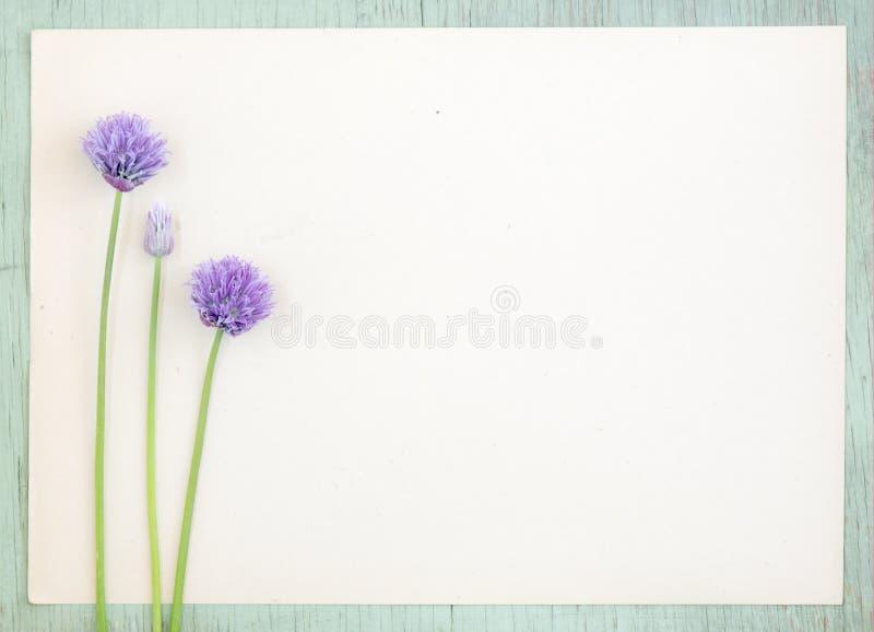 Altes Kraftpapier mit purpurroter Zwiebel blüht auf Schmutzhintergrund stockfoto